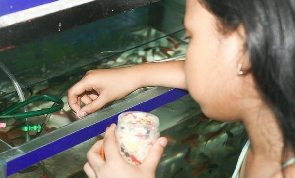 годування рибок