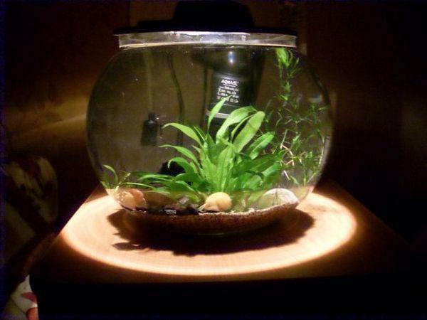 Акваріум для равликів