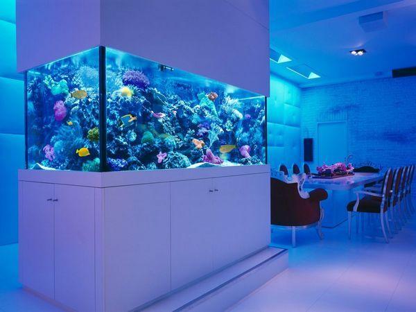 великий акваріум