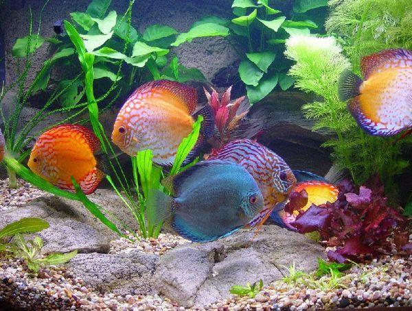 Дискуси в акваріумі