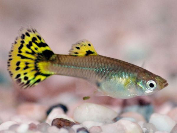 Барвисті рибки з дна океану