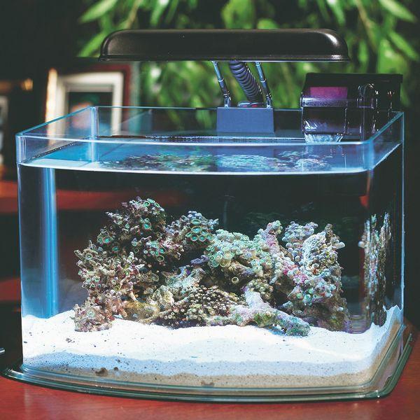 маленький акваріум