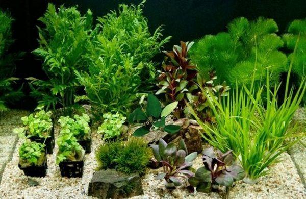 Рослини для акваріума