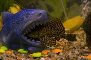 несумісні рибки