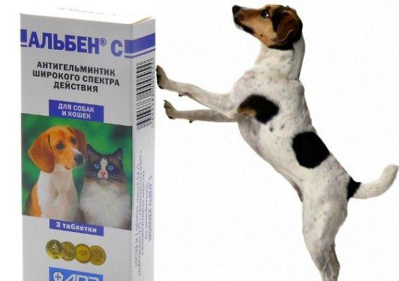 Alben s pre psy: všeobecné informácie o lieku