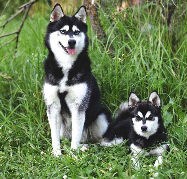 розумні собаки