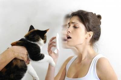 Alergia na mačky: pravidlá spoločného života