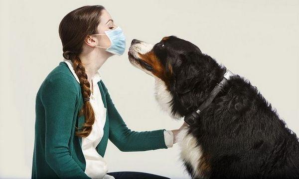 Дівчина в масці і собака