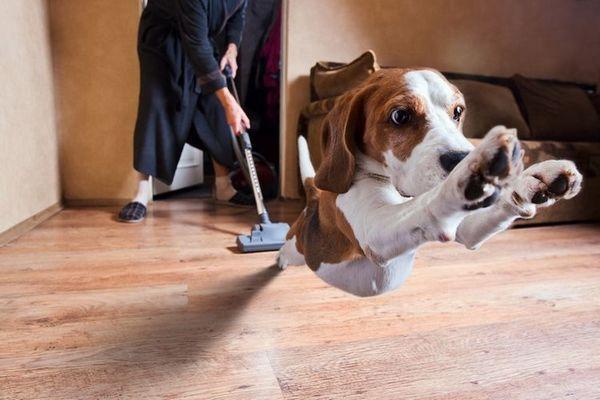 Собака тікає від пилососа