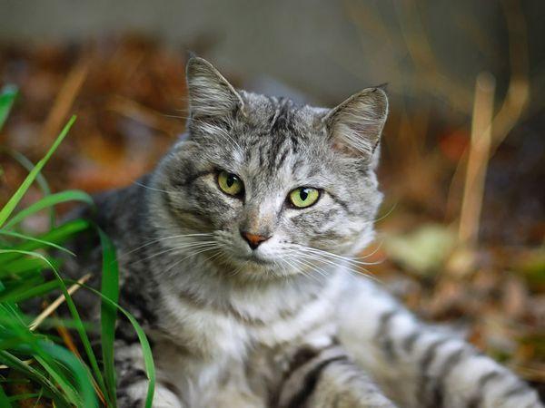 Alergie u mačiek a mačiek