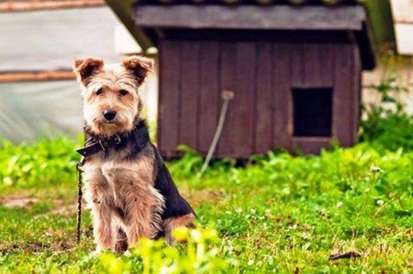 Профілактика алергії зводиться до виключення або мінімізації контакту собаки з подразником її імунітету. Наприклад, якщо це реакція на укуси комах, варто купити спеціальний нашийник, а також перед прогулянкою обробляти песика репелентом