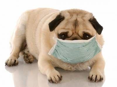 Alergie u psov: príčiny, typy a liečba