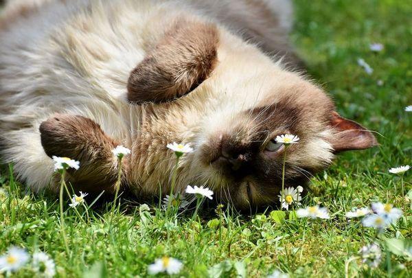 Кот лежить в траві