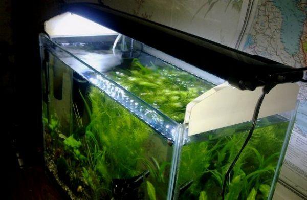 Osvetlenie akvária