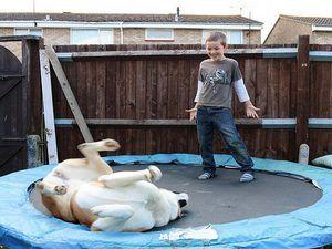 Де можна придбати собаку американська акіта