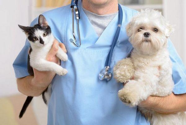 Кішка та собака