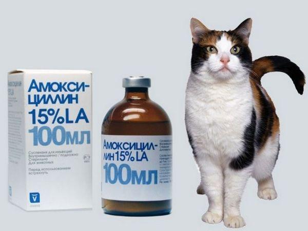 Amoxicilín pre mačky: informácie o lieku a indikácie na použitie