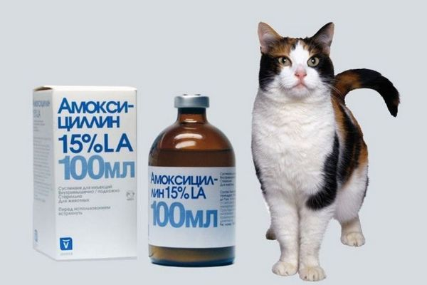 Амоксицилін для кішок