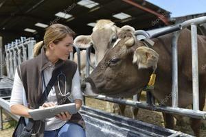 Лікування крупногорогатого худоби