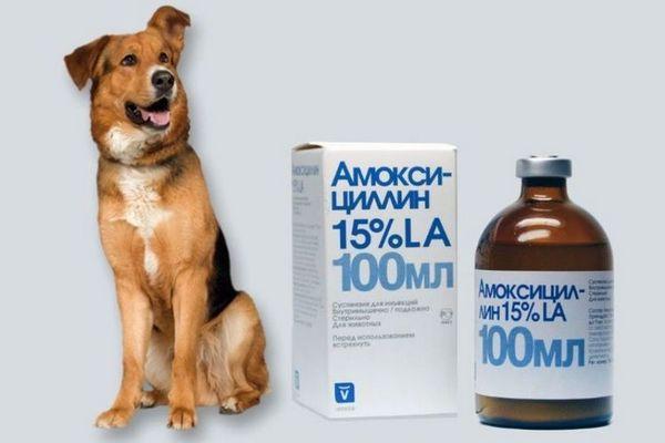 Амоксицилін для собак