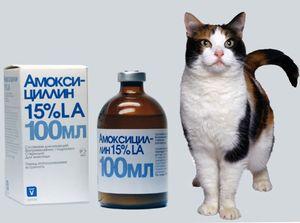Амоксицилін для кішок суспензія