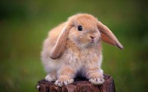Ліки для кроликів