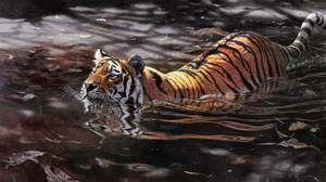 Сибірський тигр не боїться води