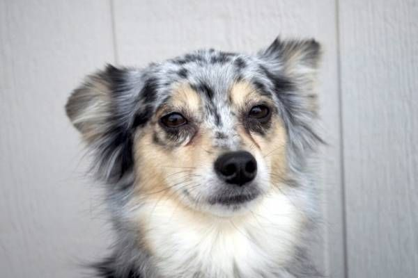 Anafylaktický šok u psov: príčiny a následky