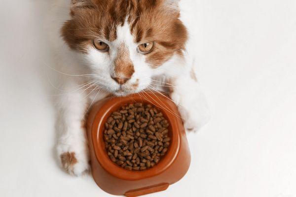 Analýza krmiva pre mačky