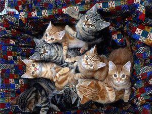 Препарати для кішок