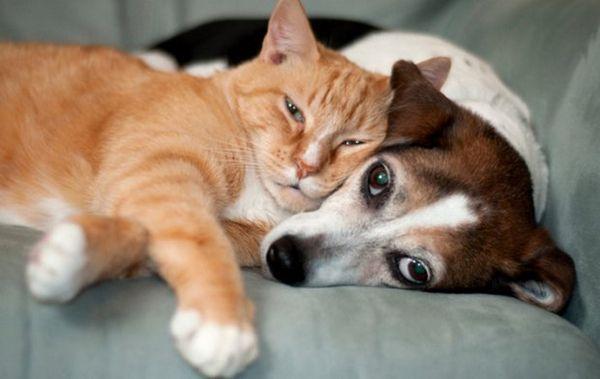Собака з котом