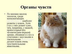 Анатомія кішок - короткий опис