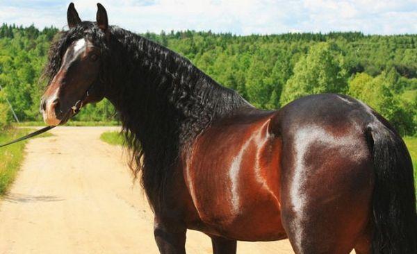 Кінь Андалузії породи