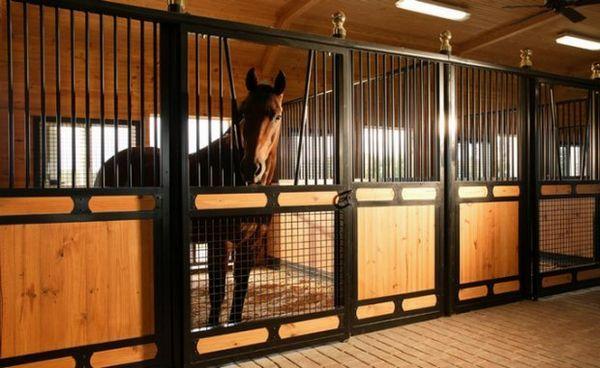 Кінь в стайні