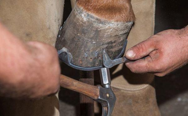 Підковка коні