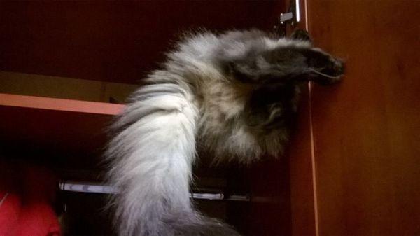 Кішка сховалася в шафі