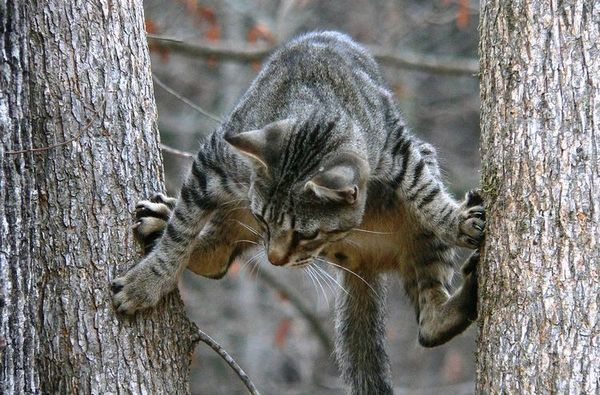 Кот між деревами