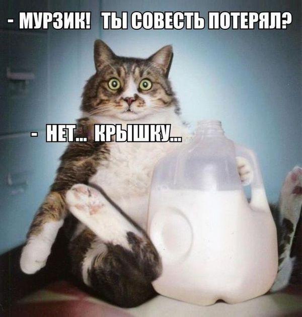 Кот і бутель молока