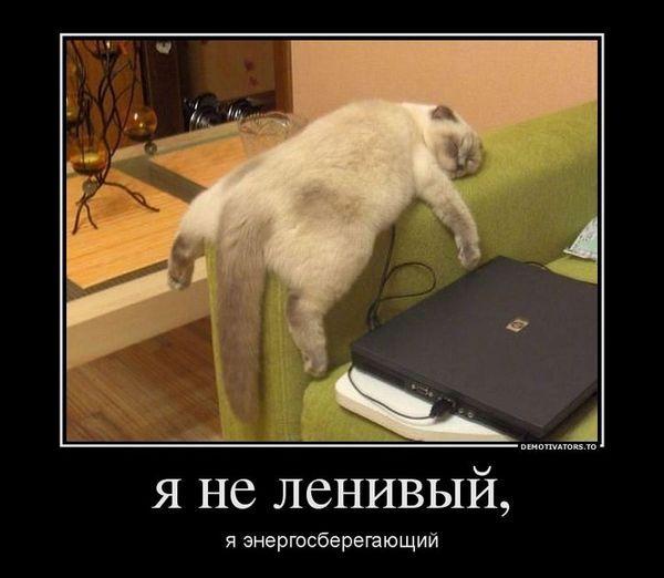 Товстий кіт спить на підлокітнику