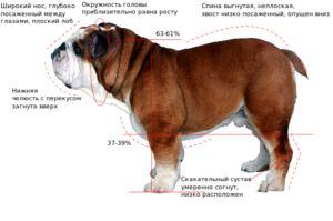 Зовнішні вид собаки