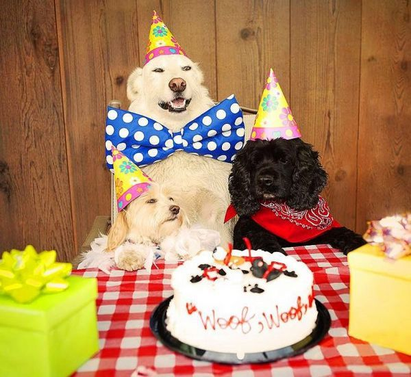 Святкова вечірка кокер-спанієля і його веселих друзів