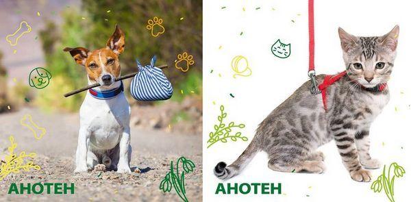 Аното для собак і кішок