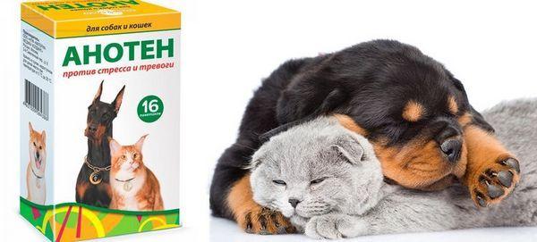 Препарат для кішок і собак Аното