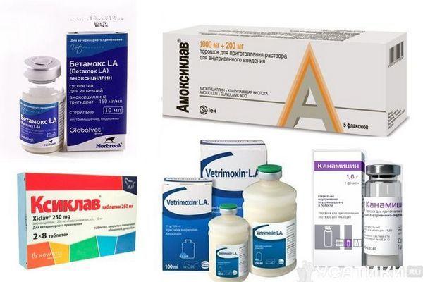 Антибіотики для котів