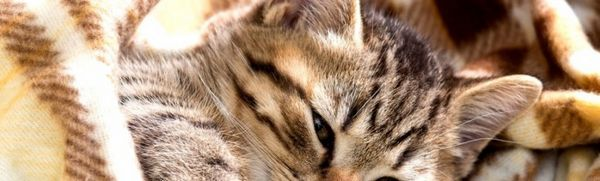 Antibiotiká pre mačky na hnisavé rany, infekčné choroby: prehľad prostriedkov a pravidiel prijímania