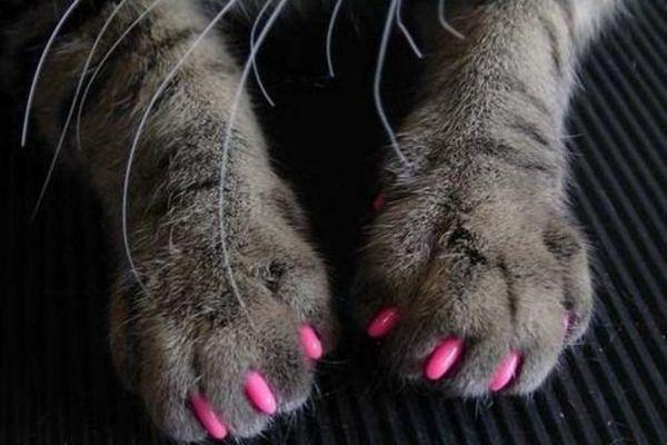 Рожеві аптіцарапкі на котячих лапах
