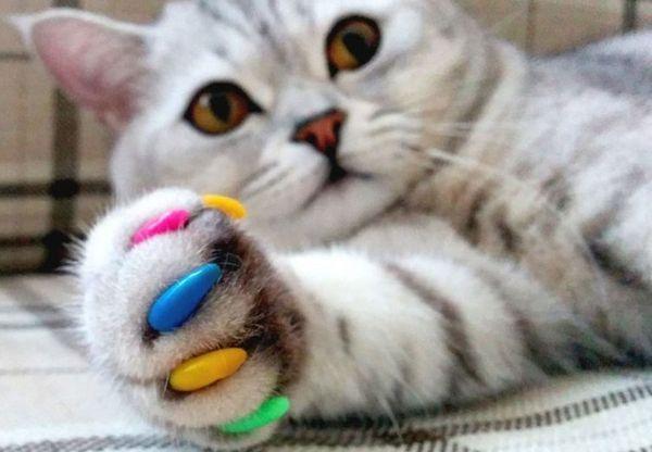 Смугастий кіт з кольоровими кігтями