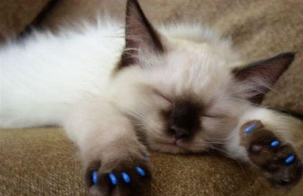 Маленький кошеня спить