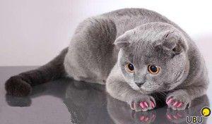 Proti poškriabaniu pre mačky: potrebuje vaša mačka pazúry?