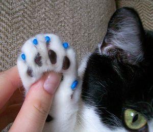 Nechty proti poškriabaniu pre mačky: pokyny, recenzie